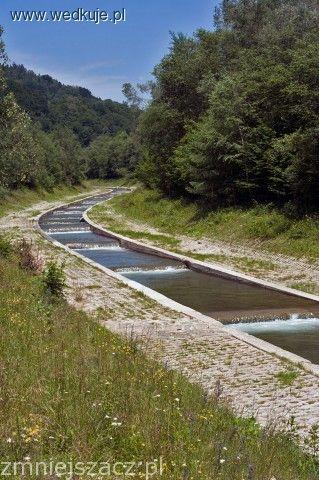 Rzeka górska Wierchomla